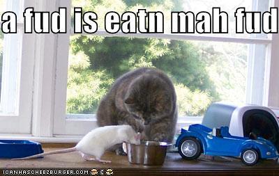 funny-pictures-cat-rat-food