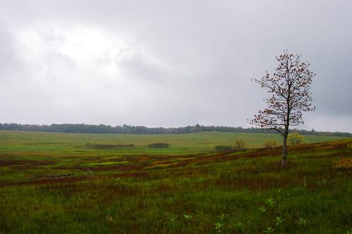 Big Meadow, Skyline Drive