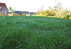 Græsplænen efter den første nattefrost