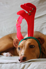 Dogs Fucking Hate Christmas