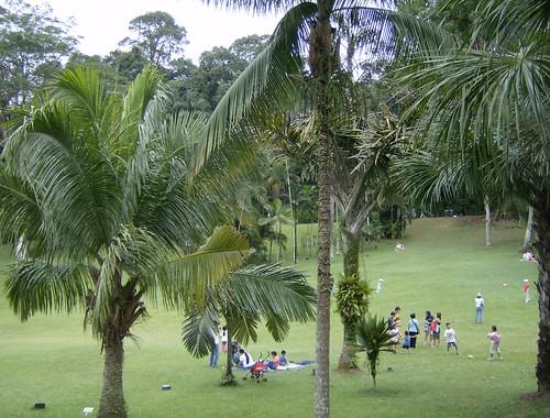 Palm Valley- Singapore Botanic Garden