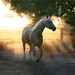 Phoebe at Sunset - Elm Creek Country by elmcreekcountry