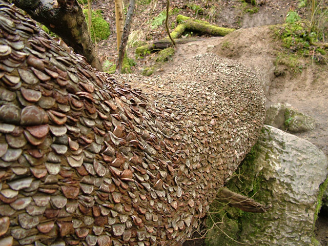 Money tree swilla glen near ingleton n yorkshire uk for Weather 73025