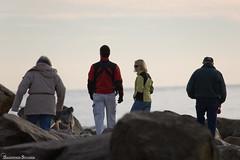 Beachcomber Family