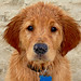"""His Name is Tucker but I Think He's Really a """"Spike"""" by karima*"""