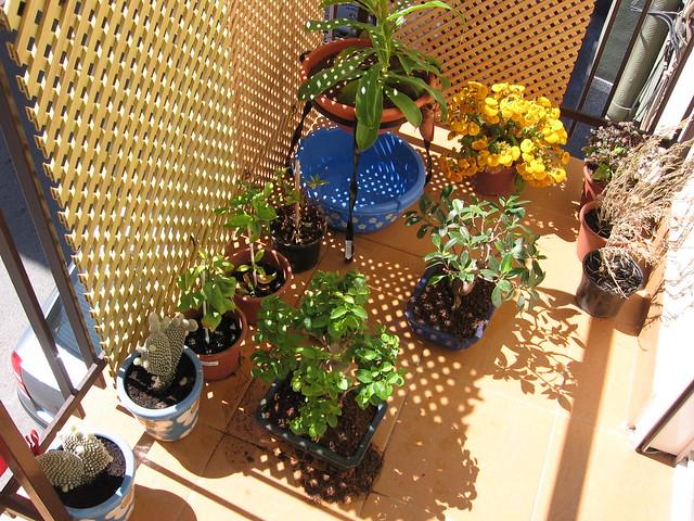 cómo diseñar y cultivar nuestro propio huerto urbano | mediavida