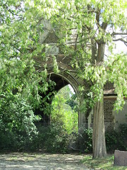 Arch beneath the tree
