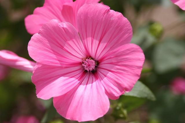 Fleur à Lorient I