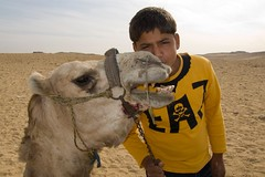 Camel Love?