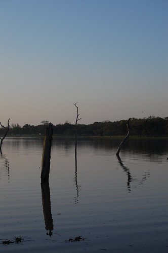 trees lake water dawn texas snags laketexana