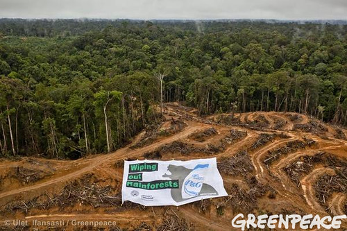 trees indonesia destruction aerialview banners deforestation palmoil proctergamble rainforests headshoulders greenpeaceactivists foreststopography palmoilproduct