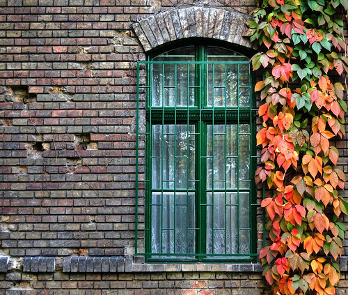 Window to Autumn