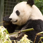 San Diego Zoo 035