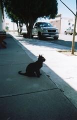 Kitties of Marfa