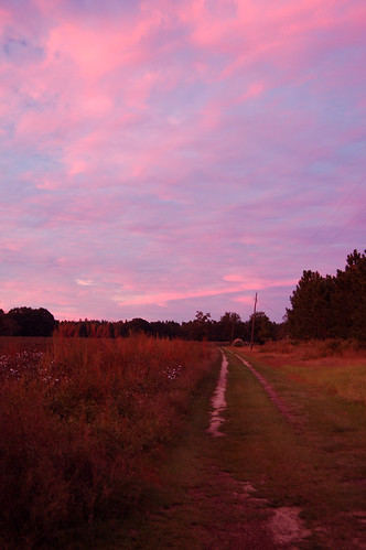 road pink sunset sky field clouds rural landscape scene cotton yonder bucolique southernsnow sellersfamilyhomestead betweenbaxleyandalmageorgia