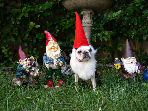 eloise vs. the gnomes