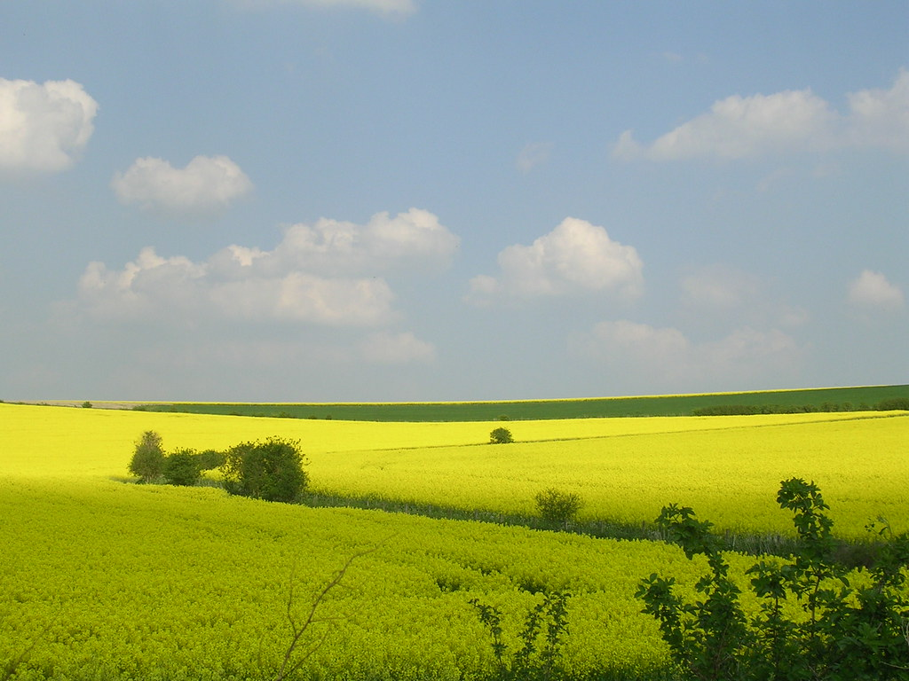 Rapefields Extra walk: Cholsey to Goring