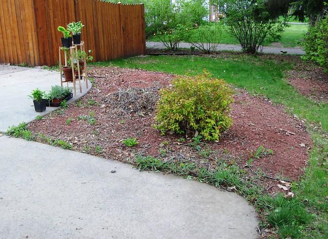 south_front_garden