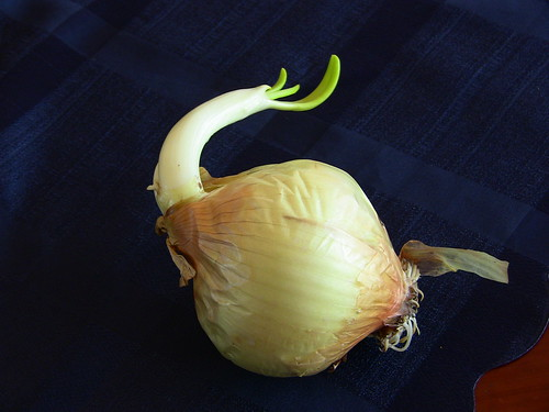 Onion - May 3