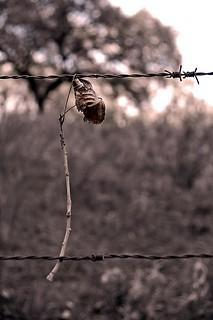 Hoja seca en alambrada