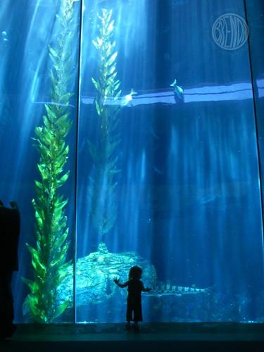 Visiting The Aquarium Secret Agent Josephine
