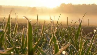 pļava Lietuvā