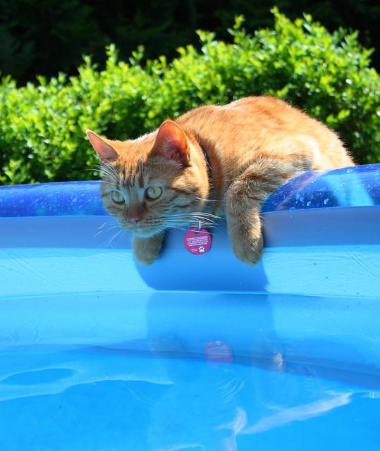 RGB - Red cat, Green bush, Blue pool