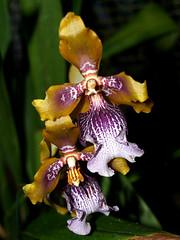 Golden Gate Park Flower Conservancy