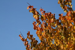 colori d'autunno: ultimo cielo