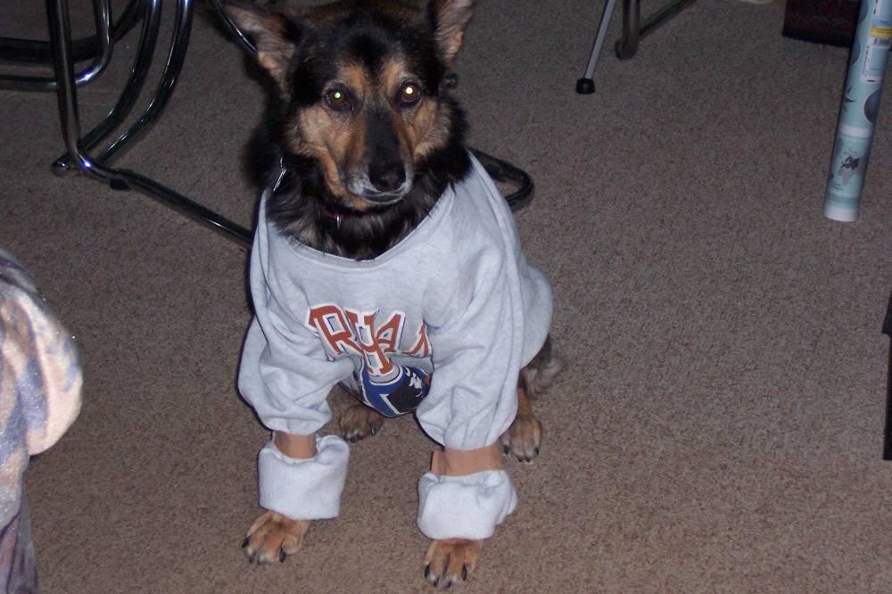 Albi in a sweatshirt 02