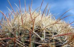 cactus photos