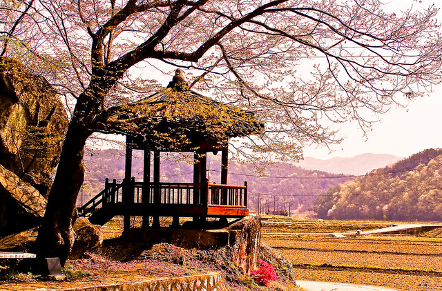 Rural Korea Springtime
