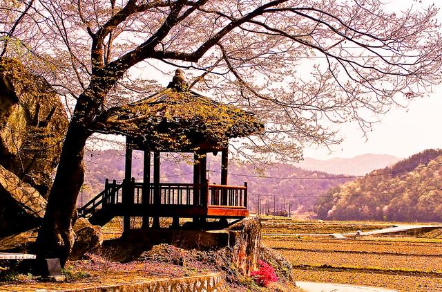 Rural Korea Springtime