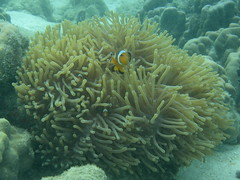 brain coral(0.0), coral reef(1.0), animal(1.0), coral(1.0), coral reef fish(1.0), organism(1.0), marine biology(1.0), invertebrate(1.0), stony coral(1.0), natural environment(1.0), cnidaria(1.0), underwater(1.0), reef(1.0), sea anemone(1.0),