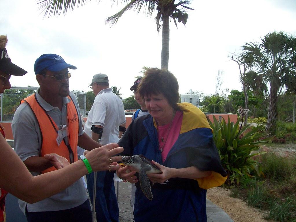 Grand Cayman Turtles