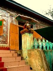 Monkey, Mount Popa, Burma