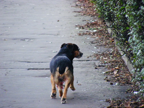 Dog running away from me...