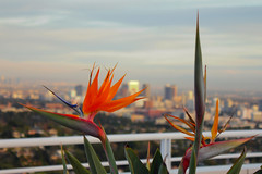 Exotic Flowers of L.A.