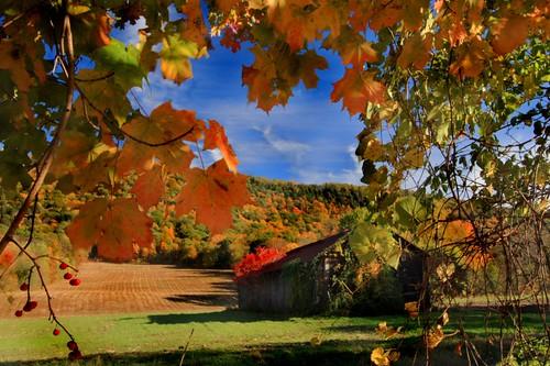 color massachusetts more mountholyoke foliagefallautumnnewenglandfarm wheremywifelearnedtoski