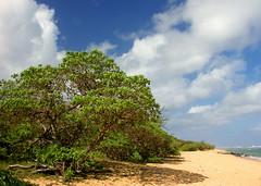 A Lazy Larsens Beach Afternoon on Kauai
