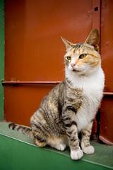 el gato 2
