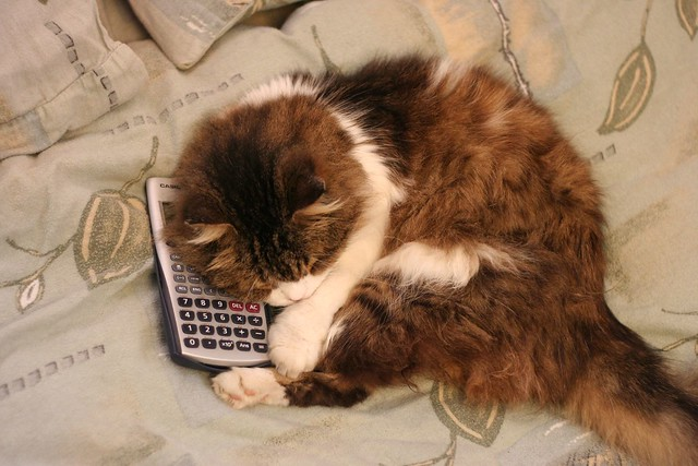 Cat and Calculator - Top View