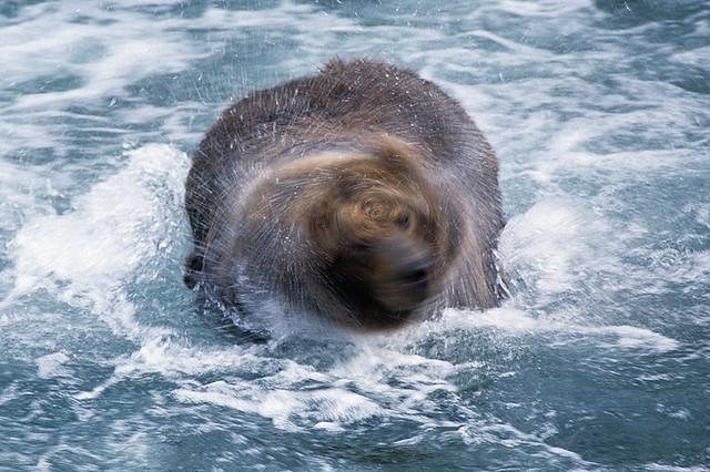 Washing Machine Bear