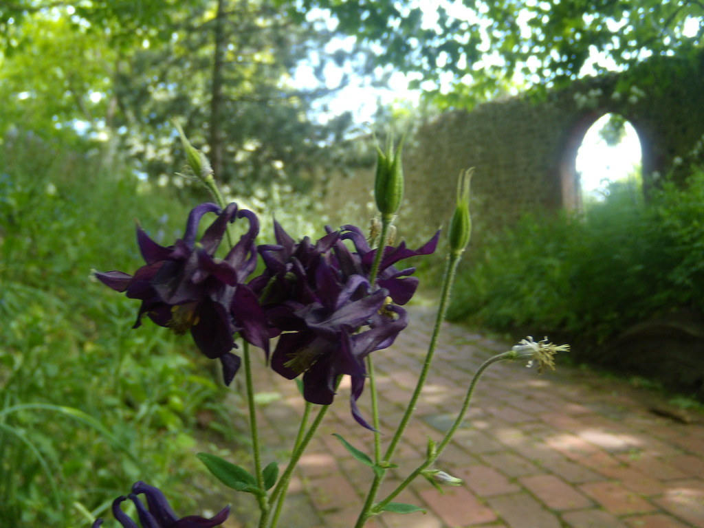 Kipling gardens, Rottingdean Southease to Rottingdean