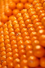 sweet corn(0.0), vegetable(0.0), flower(0.0), corn kernels(0.0), plant(0.0), dish(0.0), crop(0.0), cuisine(0.0), agriculture(1.0), maize(1.0), corn on the cob(1.0), produce(1.0), fruit(1.0), food(1.0),