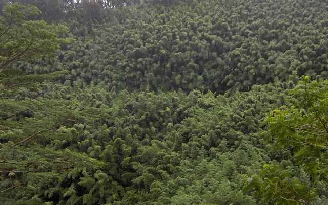 08.01 - Maui - Hana Bamboo