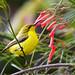 Another little sunbird ...