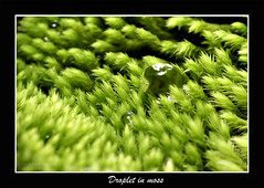 Droplet In moss