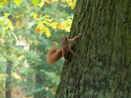 Das Eichhörnchen sprach von wildem Begehren nach Nüssen und Samen im Schlosspark Neschwitz in der Lausitz 186323