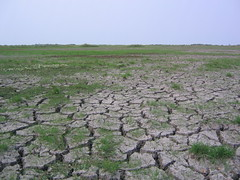 prairie, steppe, soil, drought, plain, natural environment, disaster, grassland,